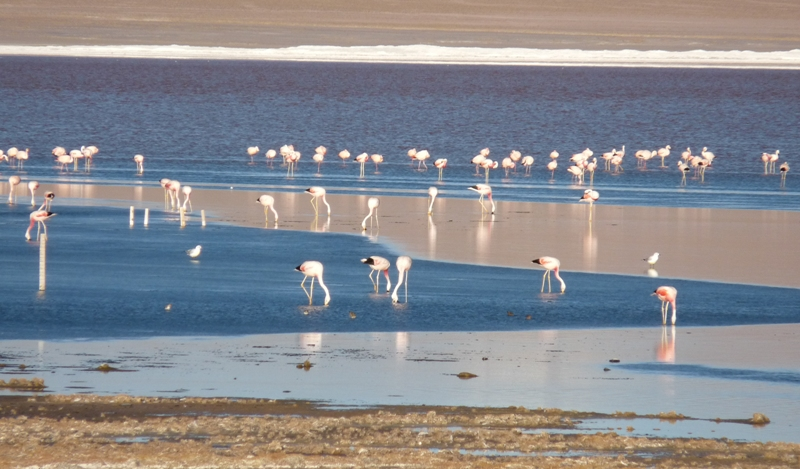 21_flamingos.jpg