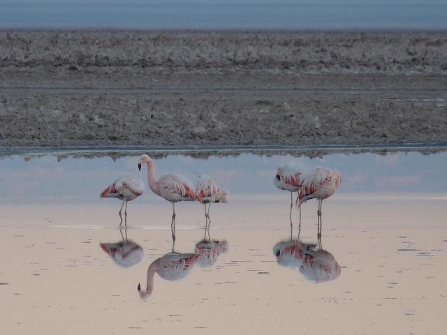 14_flamingos.jpg