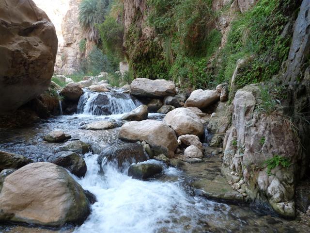 14_wadi_ibn_hamad_gruene_oase.jpg