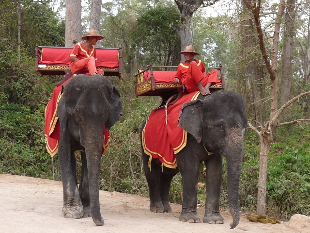 16_elefanten_fuer_den_weg_auf_bakheng_tempelberg.jpg