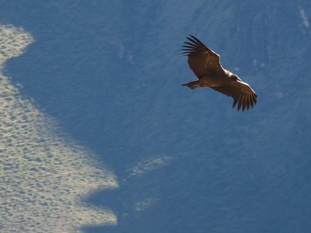58_jungvogel.jpg
